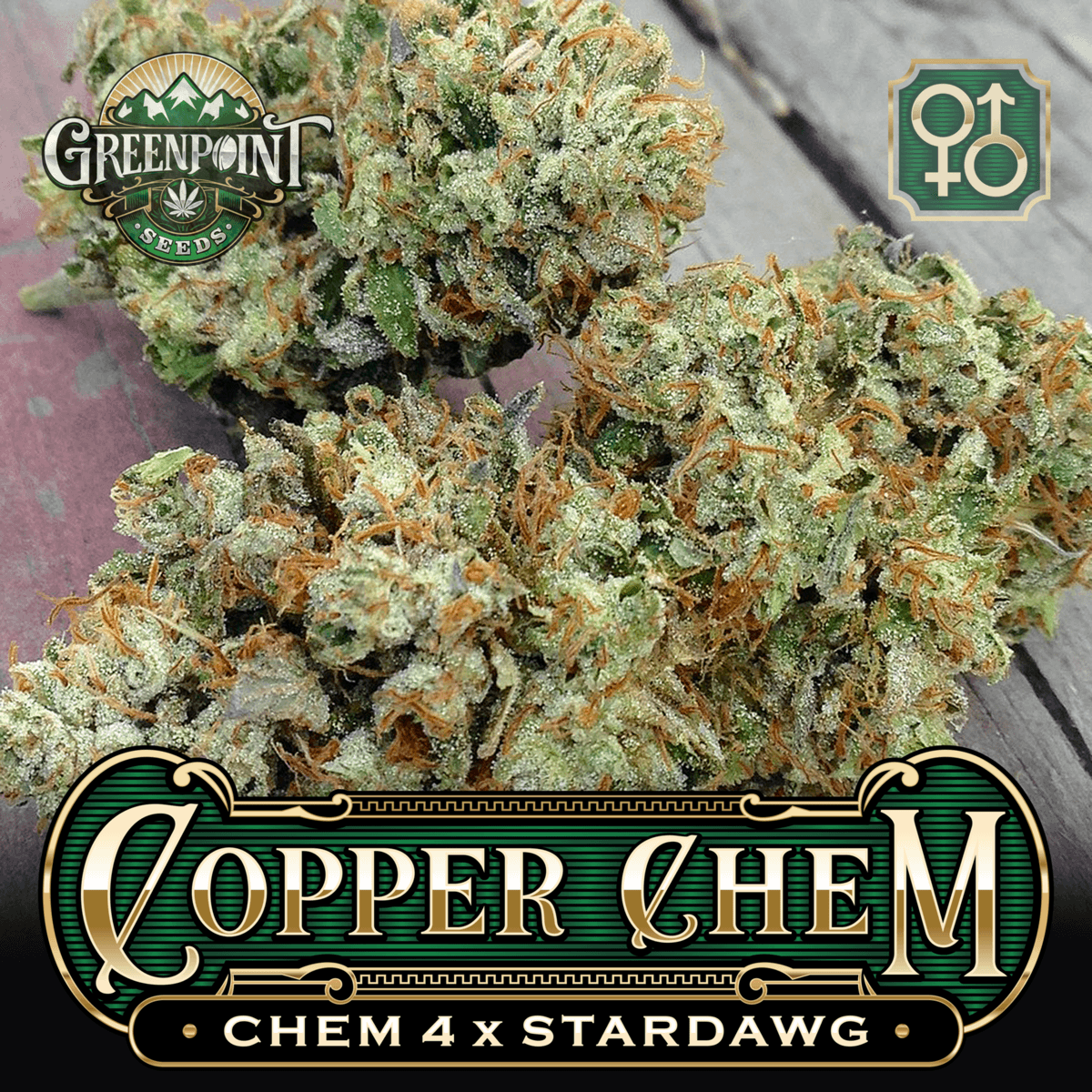 Copper Chem Cannabis Seeds - Chem 4 X Stardawg | Greenpoint Seeds